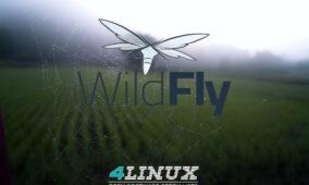 Wildfly – Domain ou Standalone ? Saiba quando escolher cada um deles !